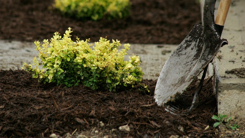 Gardening For Dummies: 5 Infallible Tips For Designing A Garden